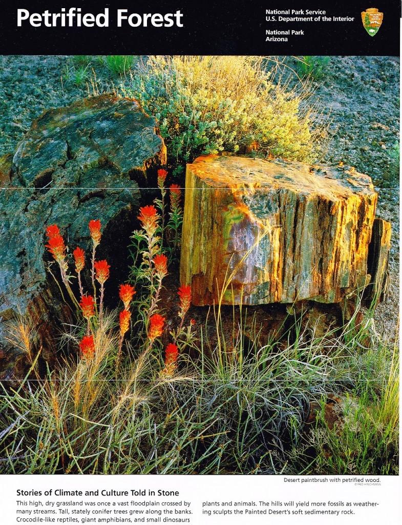 石化木国立公園1