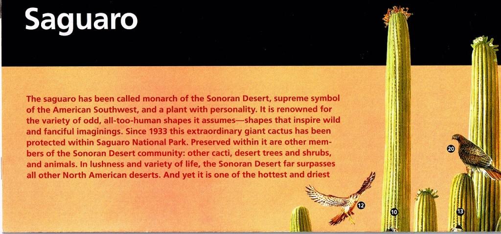 131126 案内1:サワロ国立公園